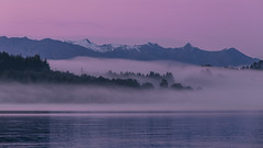 Foggy Dawn - Te Anau (zwsplac) Tags: te anau lake new zealand dawn mist fog brunell peaks mountains pink water trees forest fjordland national park southern hemisphere
