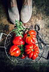 fresh tomatoes from my garden... (sonja-ksu) Tags: food vegetables tomatoes mygarden foodphotography