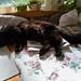 20180928 katten sover på köksbordet