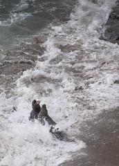 Seals (Mark Eastment) Tags: animals nature wildlife cornwall seals seal mammals water sea ocean coast