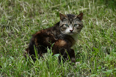 20160630_P1070033 (RudiMag - Describe your pictures please!) Tags: świnoujście kot koty cat