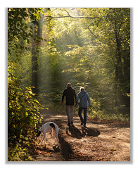 Walking the Dog (johnkaysleftleg) Tags: hawthorn hawthorndene countydurham autumn sunlight rays mist dog walking canon760d canonef50mmf18