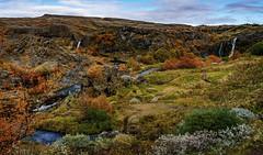 Gjáin, lush garden paradise of Eden, Iceland (Maria Ding) Tags: purple iceland landscape foliage lushgarden eden