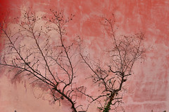 18 (marcomarchetto956) Tags: nikon romagna pink wall