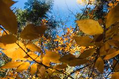 winterriveroct18-183-9 (carrieellengregory) Tags: 2018 autumn carriegregoryphotography fall october pei winterriver