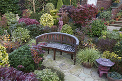 Garden seat amongst the colours of autumn (Four Seasons Garden) Tags: four seasons garden england english uk walsall colour foliage leaves 2017 flowers deciduous autumn conifer evergreen acers japanese maple marie tony newton red blue yellow green october palmatum frost