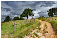 Au détour du chemin (Pascale_seg) Tags: landscape paysage campagne countryscape countryside country champs arbre tree sky ciel nuages clouds moselle lorraine grandest france été summer earth green herbe chemin