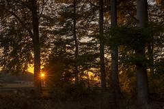 Sunset in the forest (Martin Bärtges) Tags: westerwald germany autumn herbst laub bäume baum landschaftsfotografie landscapephotography landschaften landscape d4 fx nikon natur naturephotography naturfotografie nature wald forest sunset sunshine sun