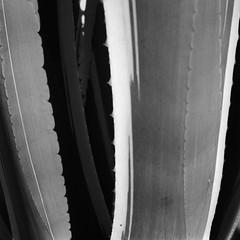 . (RoryO'Bryen) Tags: cactus universidadnacionaldecolombia bogotá tarde memory recuerdos shades shadows sombras espinas roryobryen colombia copyrightroryobryen rolleiflex mediumformat formatomedio kodaktrix film