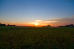 Indiana Sunset (matttimmons1) Tags: sunset indiana soy beans agriculture farm country atmosphere sun clouds color natural beauty beautiful fall foliage