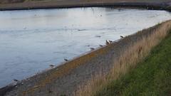 DSCN8814 (DutchRoadMovies) Tags: stevinsluizen afsluitdijk den oever a7 rijksweg ijsselmeer waddenzee bridge lake freeway motorway water sea locks