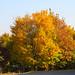 Herbst am Flugplatz Bad Neustadt