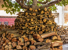 A pile of chopped trees stacked around a fig tree (zaklina.miljkovic) Tags: background bark brown burn chopped close closeup covered cut detail dry energy fire fireplace firewood forestry fuel hardwood heat log lumber material natural nature old outdoor pattern pile raw rough ruralrusticsnowstackstackedtexturetraditional trees white winter wood wooden woodpile