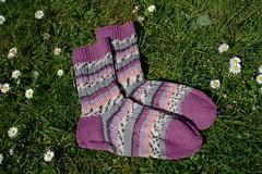 Pink striped socks (II) (dididumm) Tags: socks wool pink knit knitting spring meadow green daisy daisies handcraft selfmade striped stripey geringelt gestreift ringelsocken handarbeit selbstgemacht gänseblümchen grün wiese frühling stricken wolle socken stricksocken