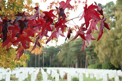 Gravestones in the background, autumn coloured leaves (kimberley07) Tags: brookwood woking surrey military cemetery grave autumn october remeberance