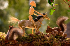 squirrels standing with a horse and skeleton (Geert Weggen) Tags: anatomy animal closeup colorimage cute dead death dentalfilling food gothicstyle halloween hell humanbodypart humanface humanhead humanskeleton humanskull humanteeth looking mammal nature nopeople photography red rodent singleobject spooky squirrel sweden vertical zombie dance love horse ride travel fall autumn mushroom cherries geert weggen bispgården seweden jämtland ragunda