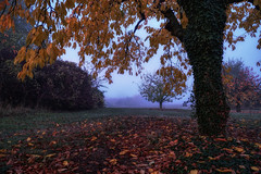 Tiffany tree (Parchman Kid (Jerry)) Tags: foggy orchard autumn leaves tree trees colors yellow red blue parchmankid sony a6500 tiffany glass