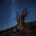 Stars at Bristlecone Pine Forest