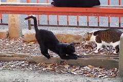 Today's Cat@2018-09-24 (masatsu) Tags: cat thebiggestgroupwithonlycats catspotting pentax mx1