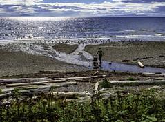 Daddy crossing (Tony Tomlin) Tags: whiterockbc britishcolumbia canada southsurrey beach driftwood logs waves ocean sea
