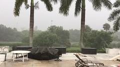 A Rainy Day in Sarasota IMG_3780 (soniaadammurray - On & Off) Tags: video rain storm weather sarasota florida usa