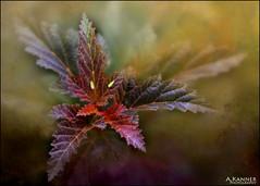 Leaves and Friends... (angelakanner) Tags: canon70d lensbaby velvet56 garden longisland closeup leaves bugs texturelayer