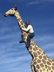 Mann auf Giraffe (Norbert.Schmidt) Tags: skulptur deutschland bronze kunst mannaufgiraffe giraffe stellingen hamburg tierparkhagenbeck