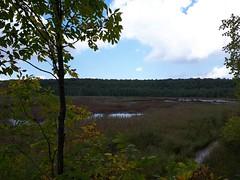 Bognor Marsh Conservation Area (kevinmklerks) Tags: nature marsh forest pond marshland