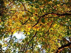 Autumn colors (An Arzhig) Tags: tree feuille feuilles autumn automne panasonic lumix gx800