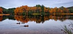 A quiet autumn day, Norway (Vest der ute) Tags: xt20 norway rogaland haugesund eivindsvatnet water landscape lake reflections autumn ducks weed trees fav25 fav200