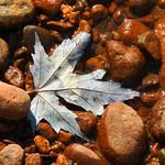 Drowned Fall Leaf thumbnail