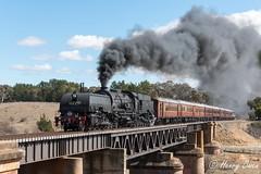 Barreling Burbong (Henry's Railway Gallery) Tags: 6029 ad60class garratt steamlocomotive steamtrain heritagetrain thnsw transportheritagensw passengertrain 6s74 burbong molongloriver