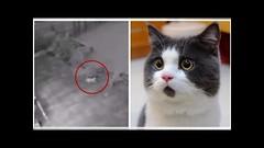 Captan a gato fantasma que se pasea por un patio antes de desaparecer (VIDEO) (HUNI GAMING) Tags: captan gato fantasma que se pasea por un patio antes de desaparecer video