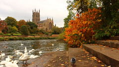 Got To love Autumn... (WorcesterBarry) Tags: colour landscapes leaves swans riversevern cathedral reflection trees places people photographers outdoors light happiness gear