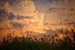 Nunca me transformaré en una brisa suave. Yo nací para ser tormenta. (elena m.d.) Tags: landscapes paisajes guadalajara storm tormenta clouds nubes cielos sky nikon