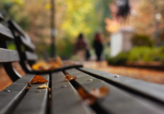 City Colors (Ian Sane) Tags: ian sane images citycolors park bench downtown portland oregon pdx dof fall autumn colors leaves street photography blurism blur canon eos 5ds r camera ef50mm f14 usm lens