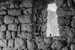 The Bird in Machu Picchu (Geraint Rowland Photography) Tags: inca incaruins incabuilding incaarchitecture stones stonehouse stonebuilding peru peruvianculture cusco viistperu machupicchu thebuildingsofmachupicchu travelblogonmachupicchu photosofmachupicchubygeraintrowland geraintrowlandphotography blackandwhitephoto birds smallbird blackandwhitenature