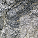 Gneiss (Archean; Ennis Lake North roadcut, Madison County, Montana, USA) 5 thumbnail