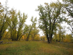 Autumn Bow River Parkway (Mr. Happy Face - Peace :)) Tags: art2018 yyc fishcreek park pathways hiking autumn fall september calgary alberta canada cans2s scenery landscape nature woodlands river fishing flyfishing