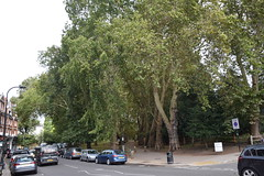 DSC_9143 Hampstead Heath London Allée walkway lined with trees (photographer695) Tags: hampstead london heath allée walkway lined with trees