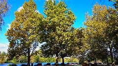 Hűvös szelek járnak (Szombathely) (milankalman) Tags: autumn wind fall blue nature