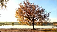 Herfstkleuren, fall colours (simonhermans) Tags: fallcolours herfstkleuren vessem netherlands fall herfst