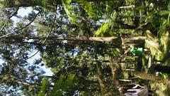 PA010551 (earth_cixing) Tags: 慈心華德福 大地班 2018 5b 校外教學 福山植物園 植物主課
