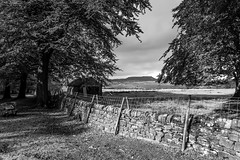 Away to Higger Tor. (gavsidey) Tags: higger tor longshaw nt national trust ngc d500 stone wall fence field trees texture black white barn