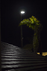 (kylestevengreenberg) Tags: niftyfifty canon shine manhattanbeach palmtree roof night