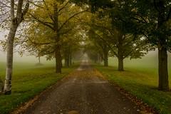 (SONICGREGU) Tags: october foggyday fog 35mm nikond610 road nature trees ruralontario rural fall nikon canada ontario autumn