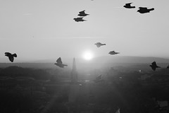Sunrise Avignon (updownmo) Tags: sky mist birds animals fly buildings architecture art view camera canon image photo clouds blackandwhite monochrome windows roof rooftop form distance nature flyingbirds sunrise sun clearsky