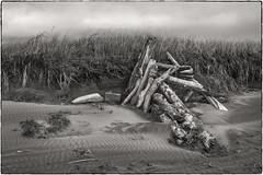 Windbreak (NoJuan) Tags: silverefexpro bw blackwhite sepia sepiatone silverefexsoftsepia 1250mmolympus olympus1250mmf3563 em1 olympusem1 microfourthirds micro43 mirrorless ocean oceanbeach washingtoncoast sand blowingsand shoreline driftwood windbreak westport