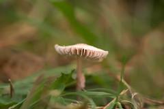 Seta (Sanmi Fotografía) Tags: setas bolet naturaleza nature naturephotography naturephotographer natura