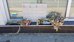 3 days before legal cannabis in Canada: closure of a Halifax cannabis dispensary (Coastal Elite) Tags: dispensary remedy halifax novascotia canada legalization closed closure sign thanks thankyou clients fermeture independent dispensaries unauthorized illegal legal legalize prohibition marijuana marihuana weed pot bunch flowers bouquet fleurs business medical medicinal medicalcannabis goodbye message signs mourning display window community maritimes